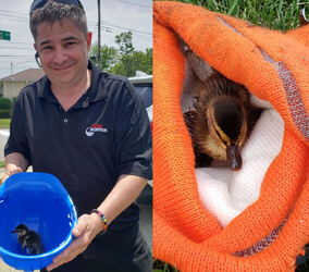 Jimmy Gannon and rescued duck